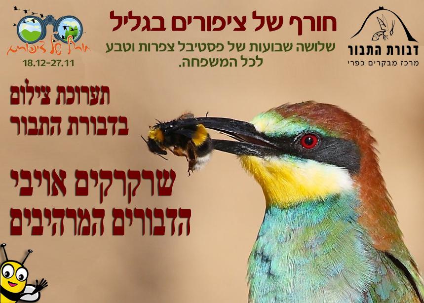 פסטיבל חורף של ציפורים 2012